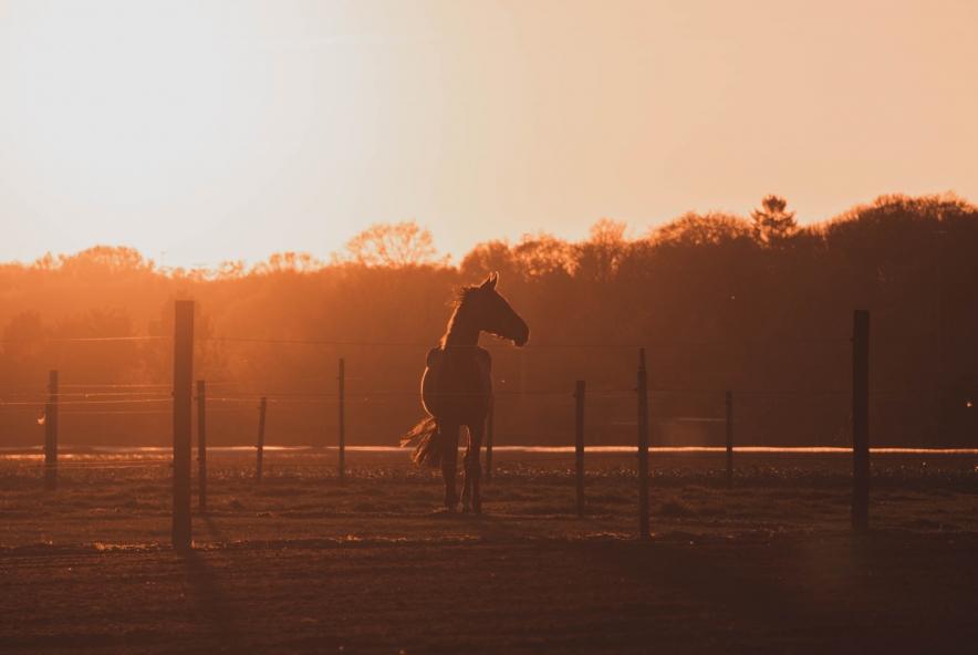 táblás kerítés és ló
